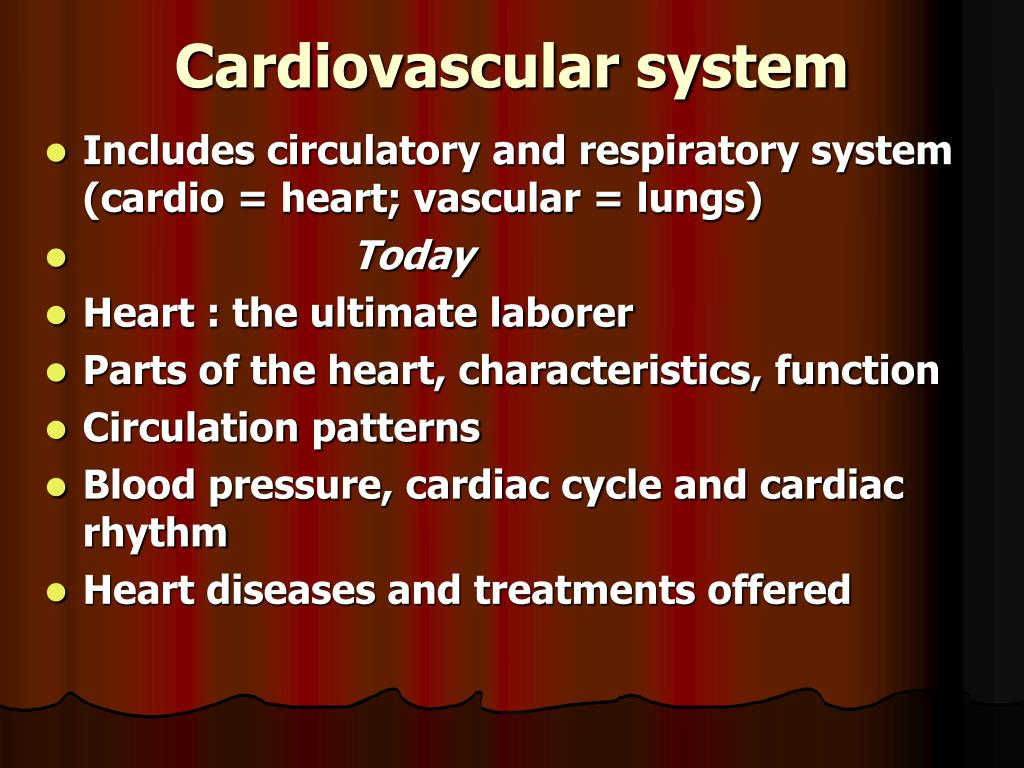 Includes circulatory and respiratory system (cardio = heart; vascular = lungs)
