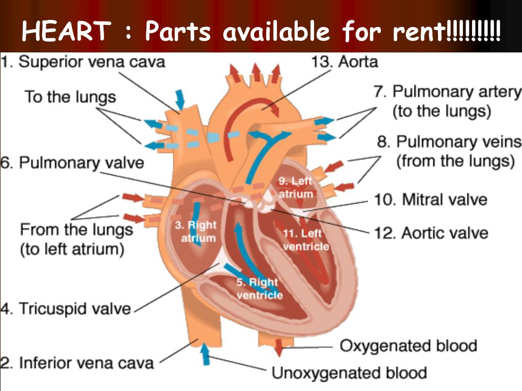 HEART : Parts available for rent!!!!!!!!!