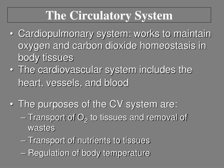 Ppt The Circulatory Responses To Exercise Powerpoint Presentation