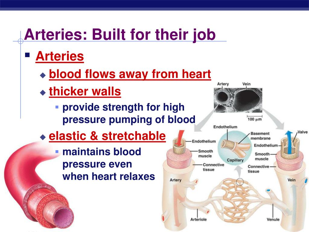Arteries: Built for their job