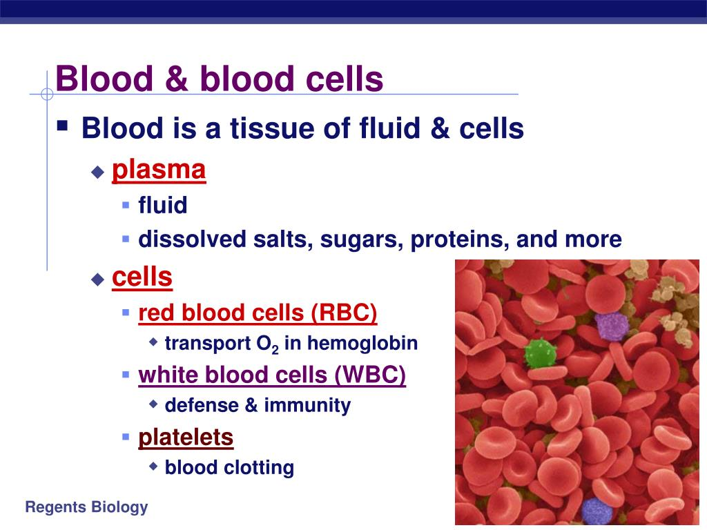 Blood & blood cells