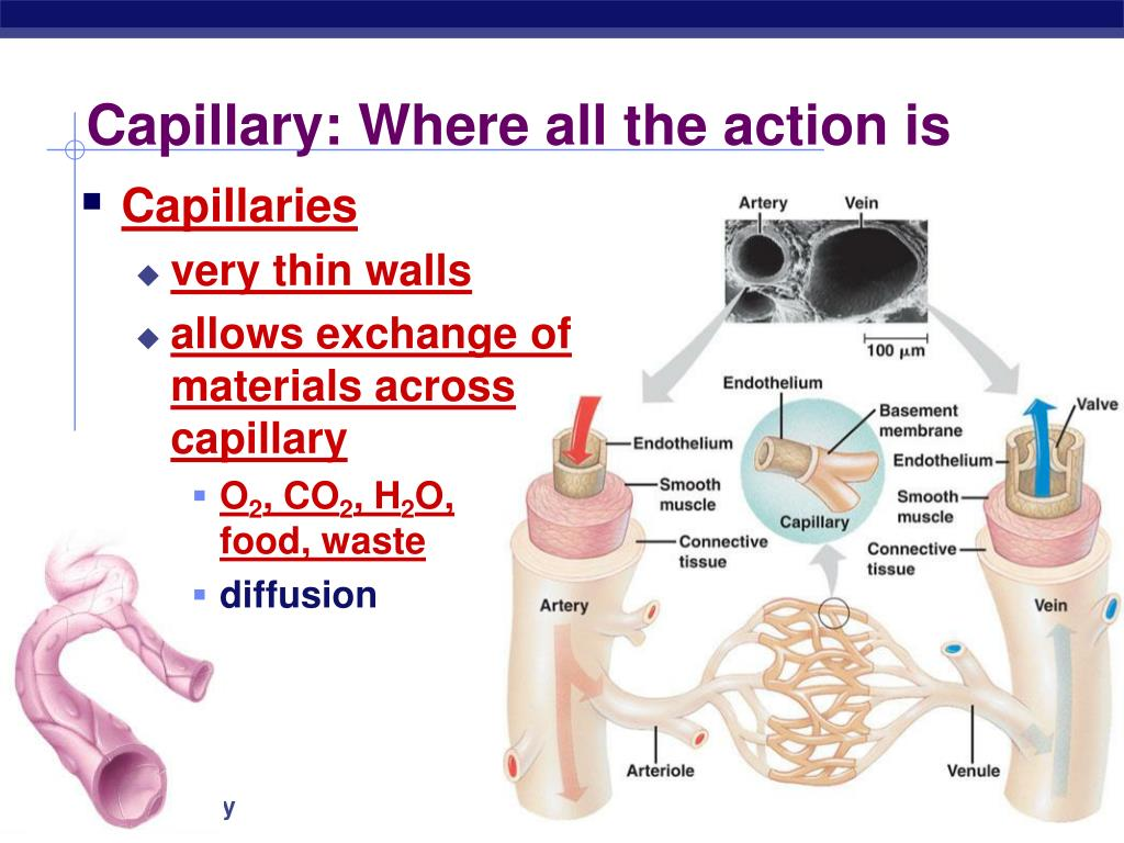 Capillary: Where all the action is