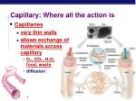 capillary where all the action is