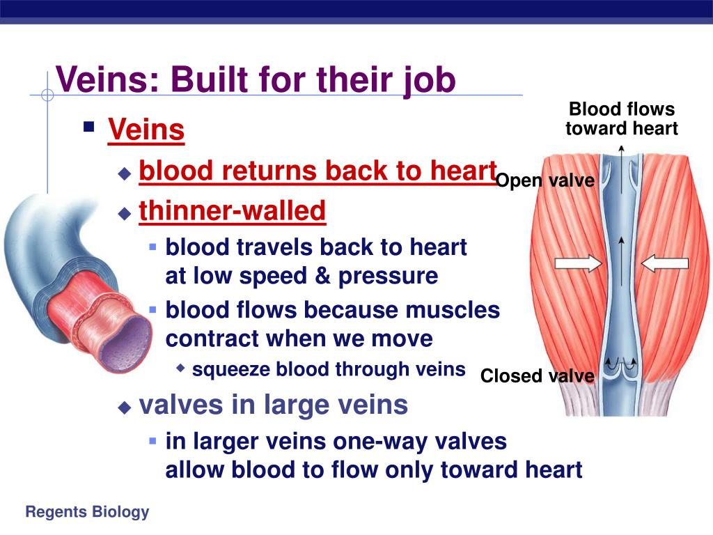 Veins: Built for their job