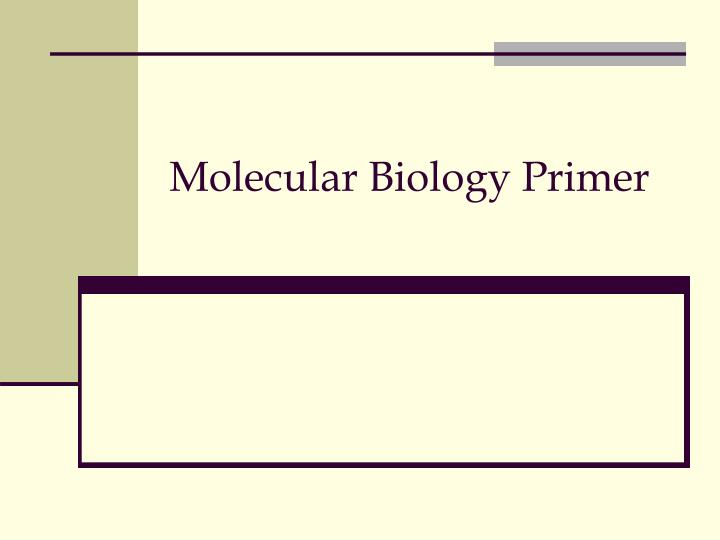 molecular biology primer n.