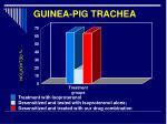 guinea pig trachea