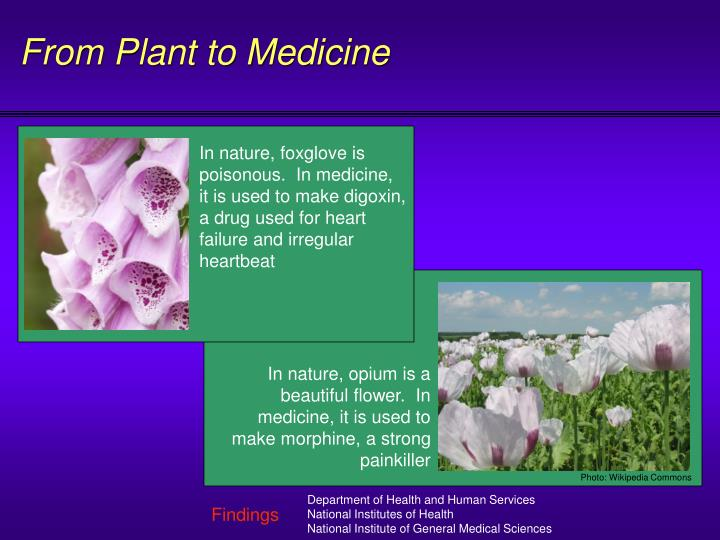 From Plant to Medicine
