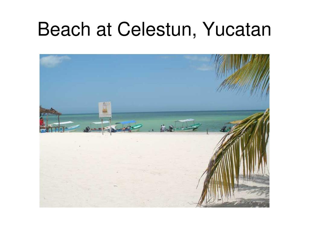 beach at celestun yucatan l.
