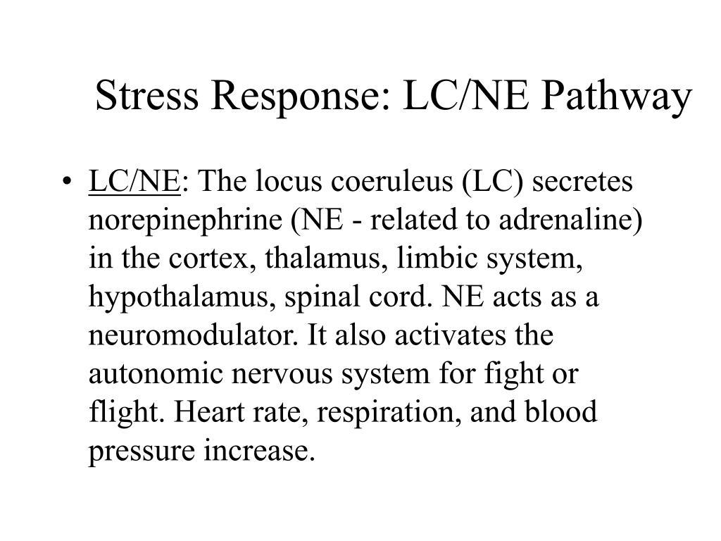 Stress Response: LC/NE Pathway