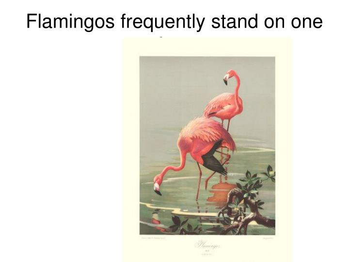 Flamingos frequently stand on one leg