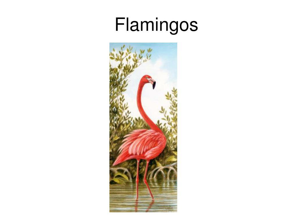 flamingos l.
