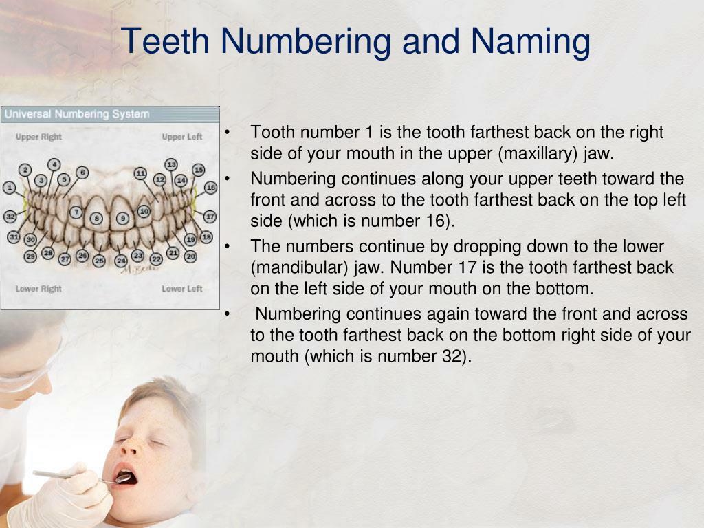 Teeth Numbering and Naming