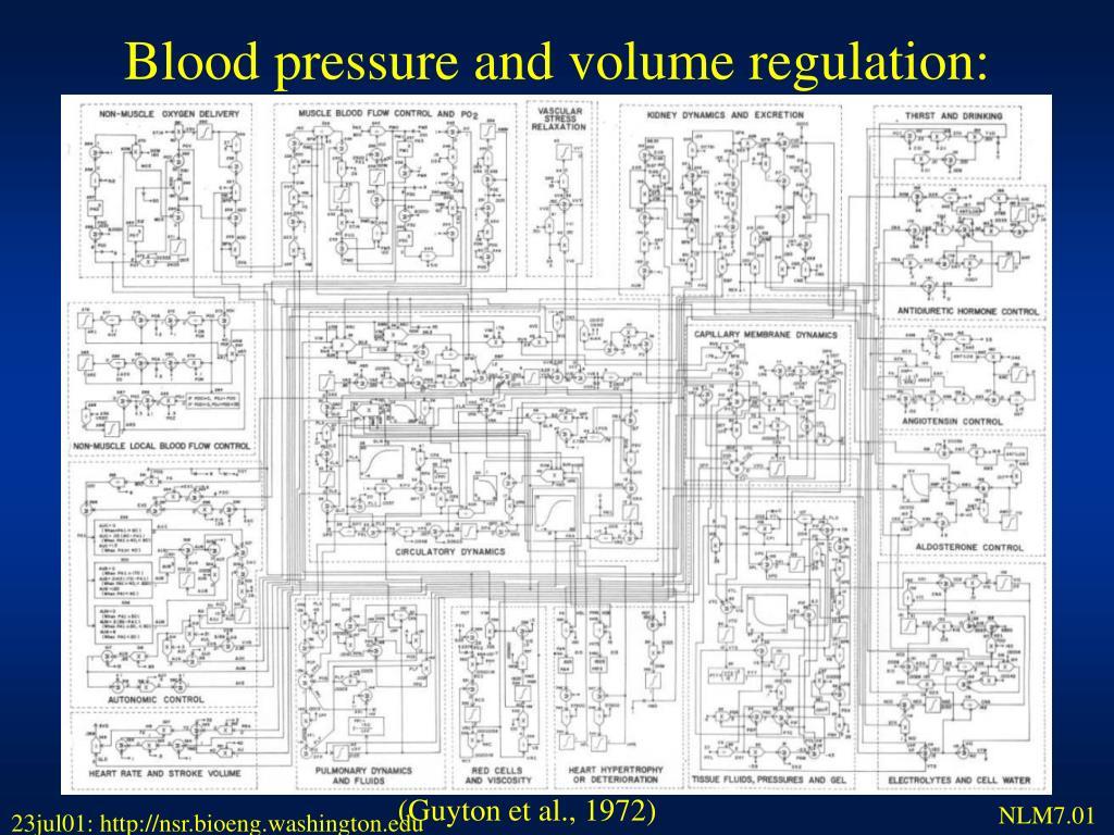 Blood pressure and volume regulation: