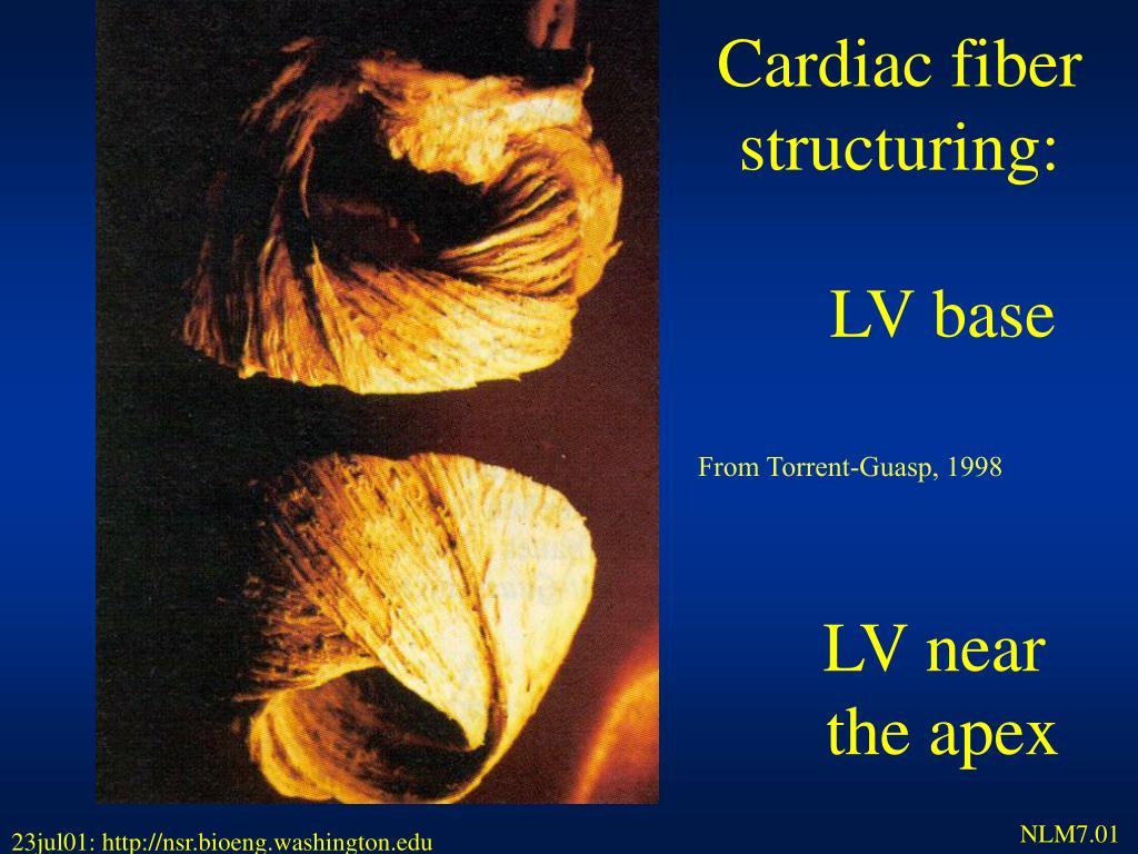 Cardiac fiber structuring: