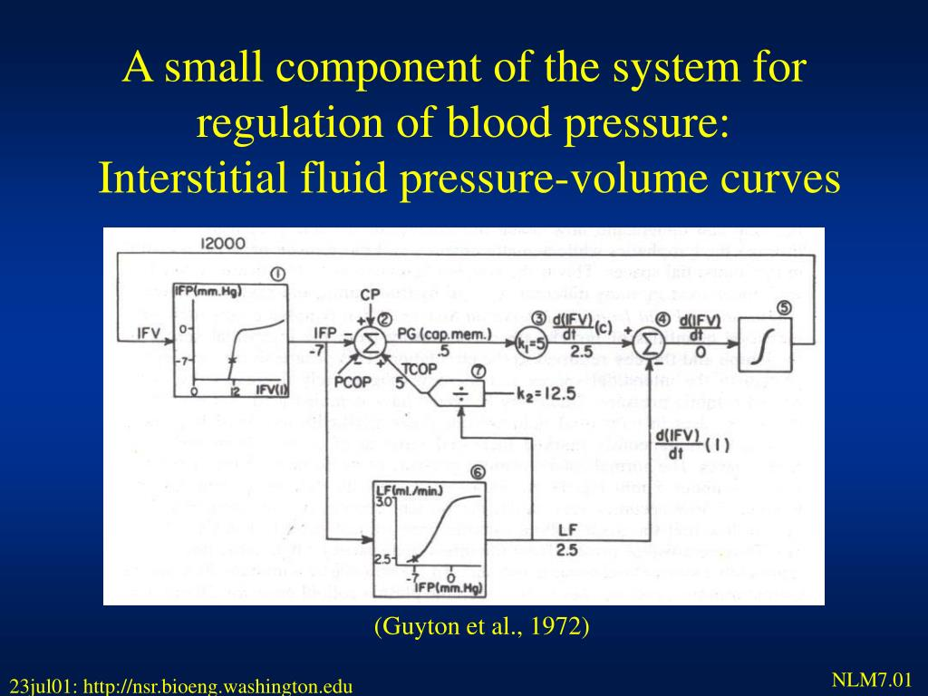A small component of the system for regulation of blood pressure: