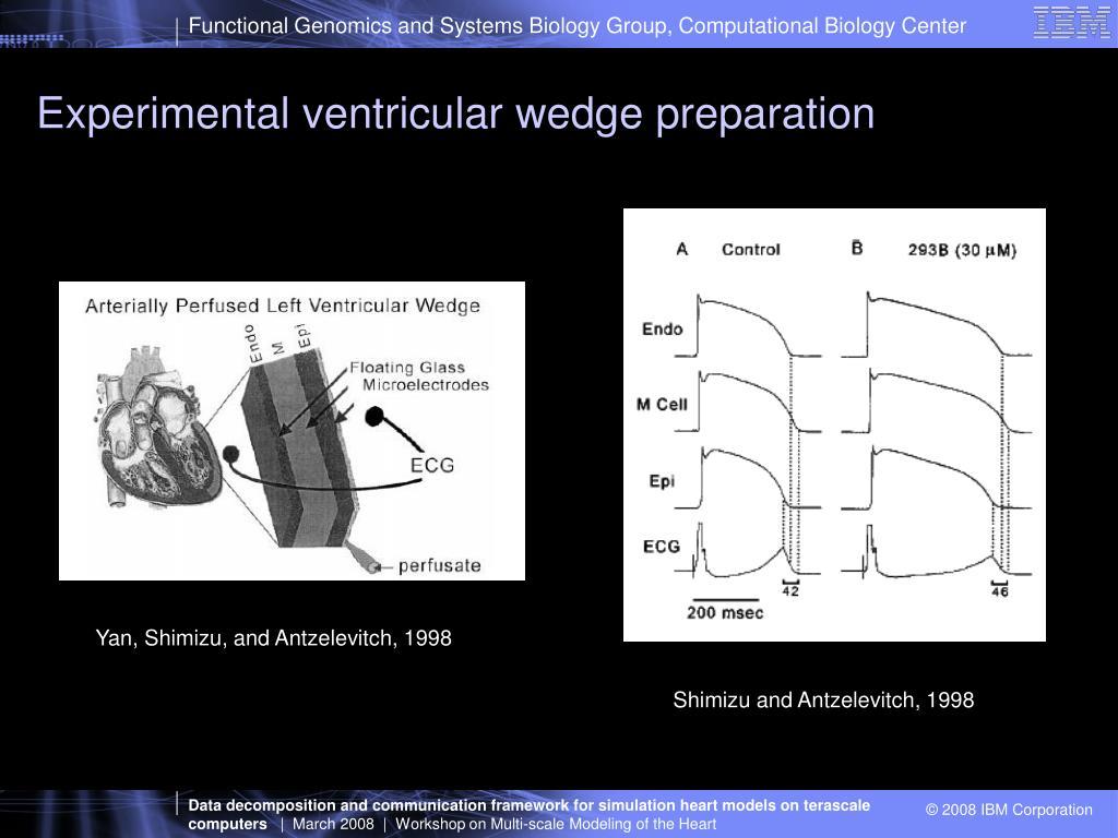 Experimental ventricular wedge preparation
