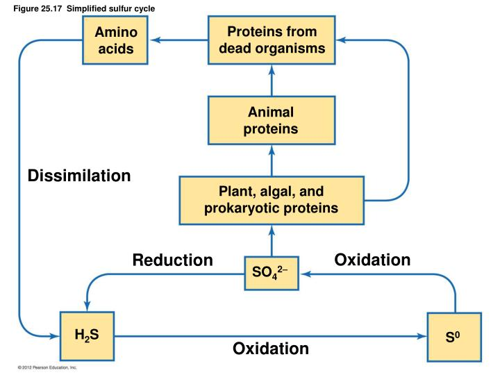 Proteins from
