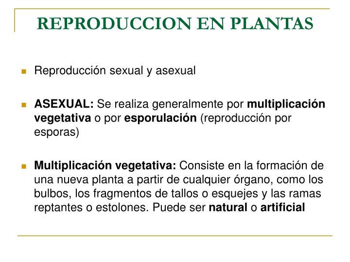 REPRODUCCION EN PLANTAS