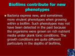 biofilms contribute for new phenotypes