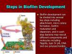steps in biofilm development