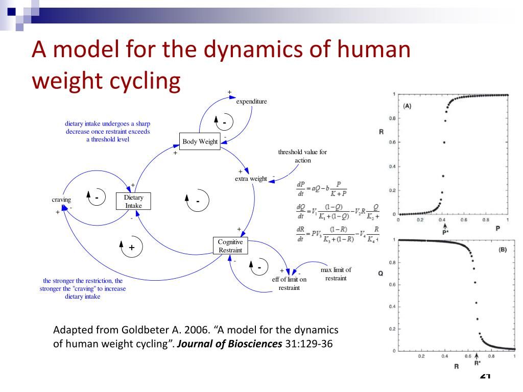 A model for the dynamics of human
