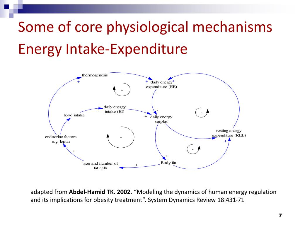 Some of core physiological mechanisms Energy Intake-Expenditure