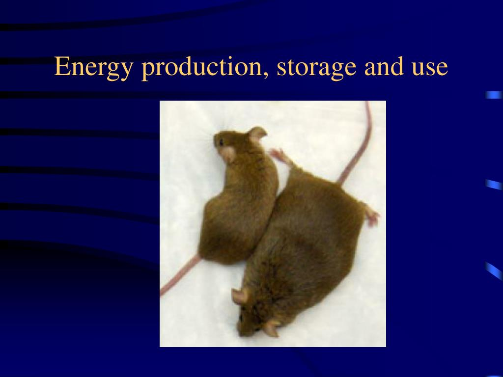 Energy production, storage and use