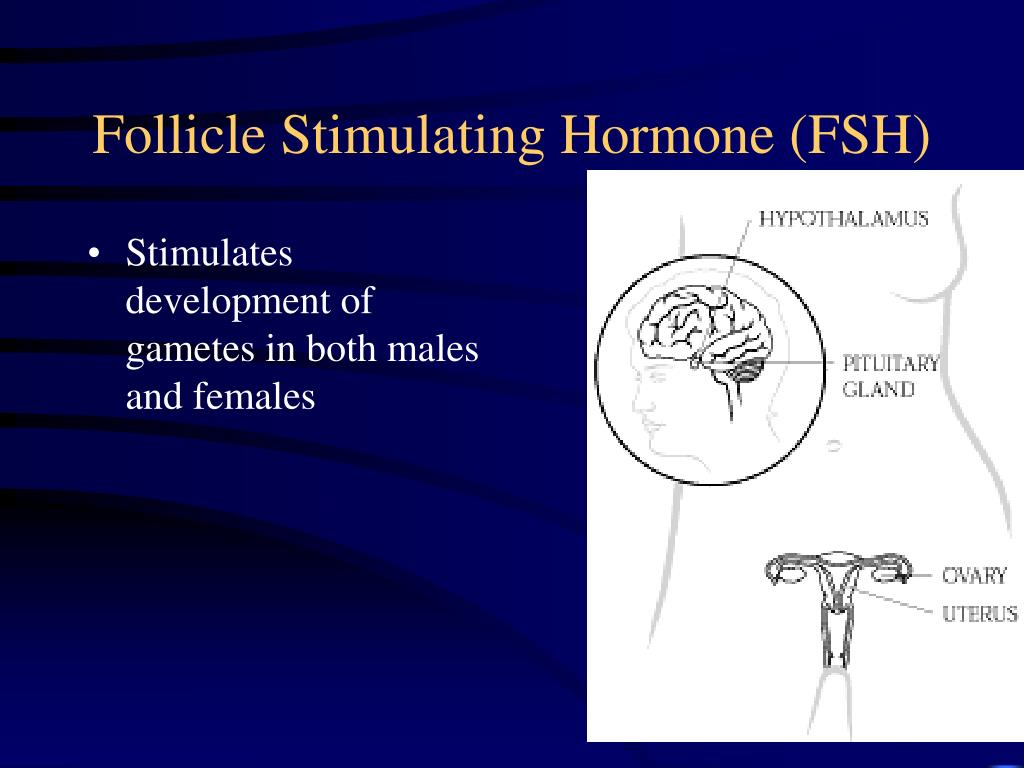 Stimulates development of gametes in both males and females
