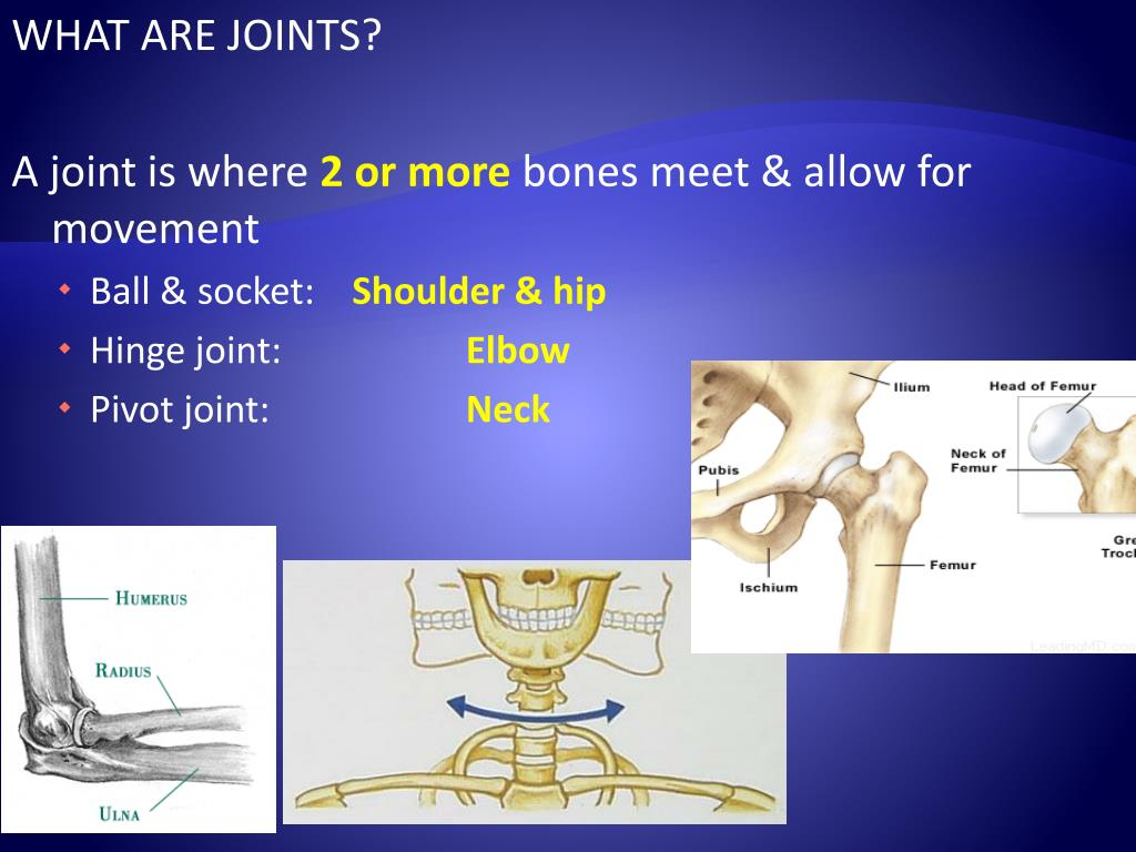 WHAT ARE JOINTS?