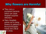 why flowers are harmful