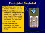 factoids skeletal