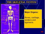 major organs bones cartilage tendons and ligaments