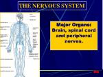 major organs brain spinal cord and peripheral nerves