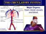 major organs heart blood vessels and blood