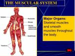 major organs skeletal muscles and smooth muscles throughout the body