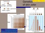 genetics of skin color