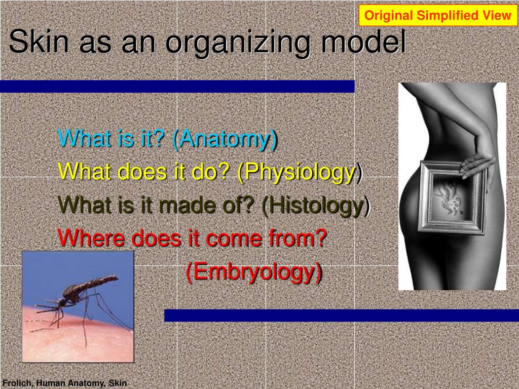 skin as an organizing model l.