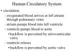 human circulatory system24