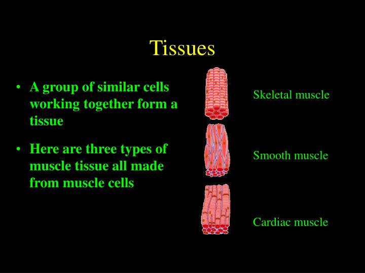 Tissues3