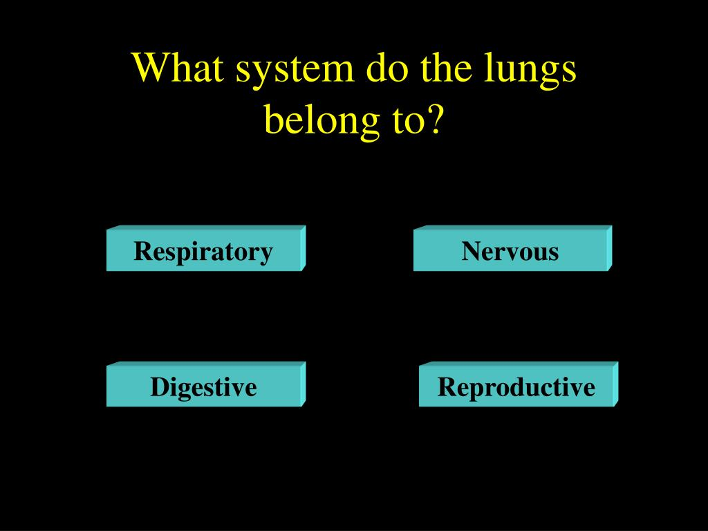 What system do the lungs