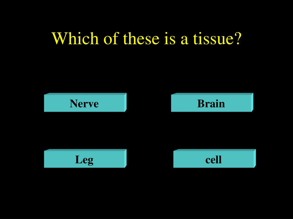 Which of these is a tissue?