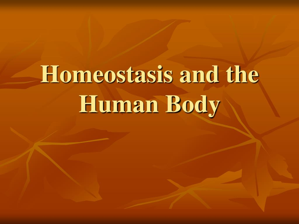 homeostasis and the human body l.