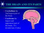 the brain and its parts