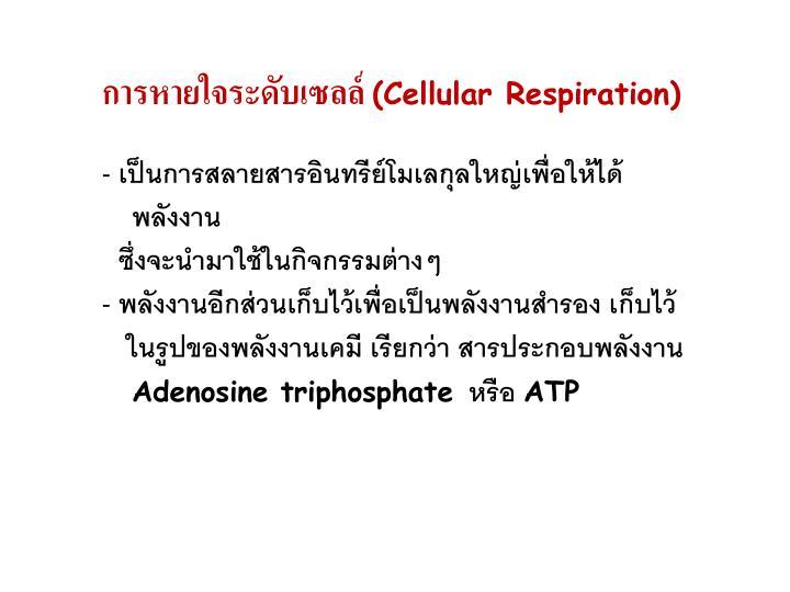 การหายใจระดับเซลล์