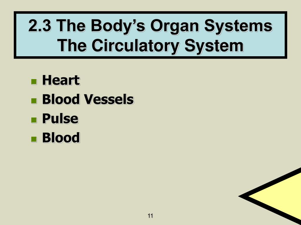 2.3 The Body's Organ Systems