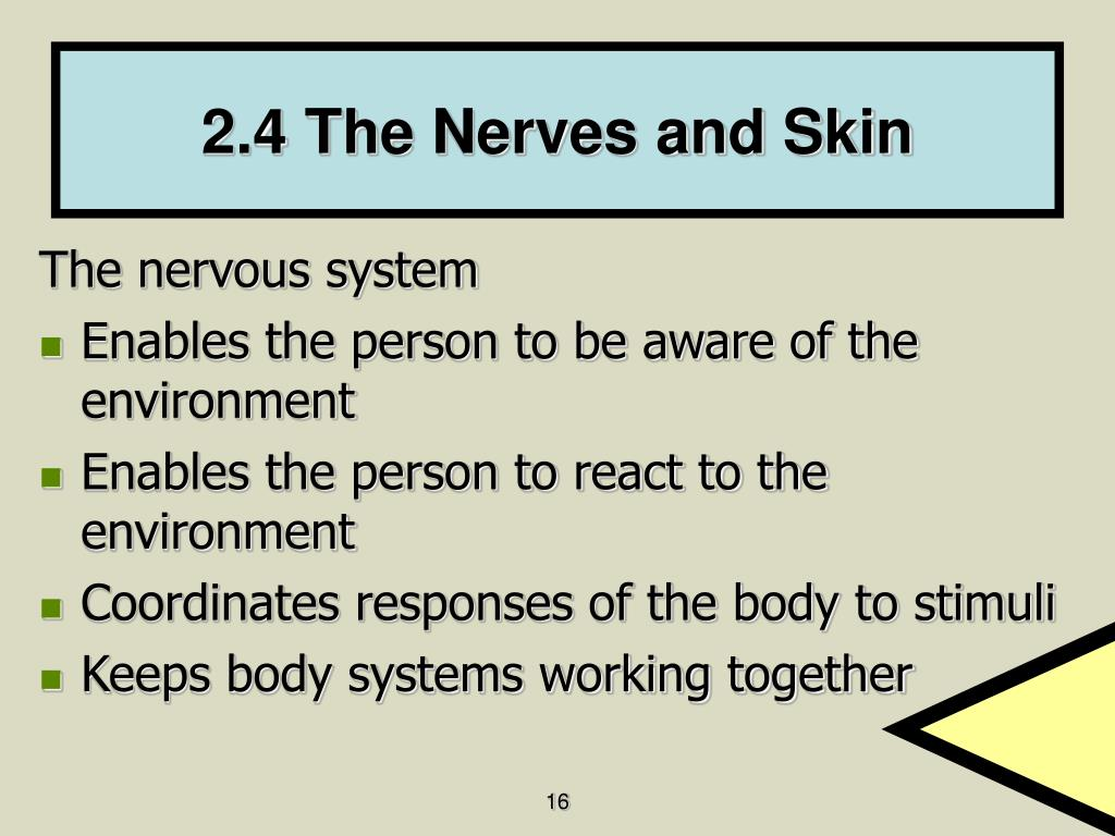2.4 The Nerves and Skin