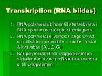 transkription rna bildas