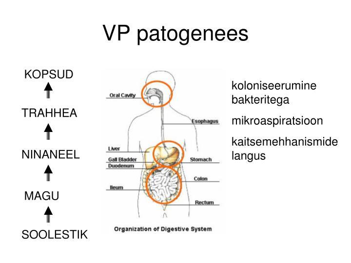 VP patogenees