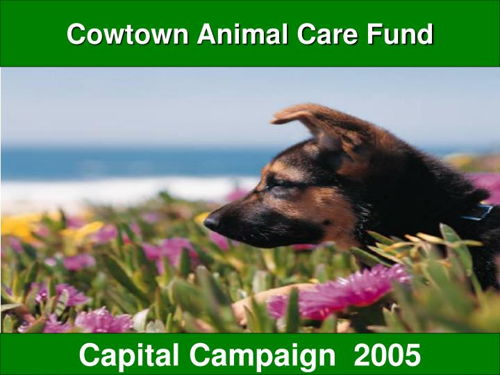 cowtown animal care fund n.