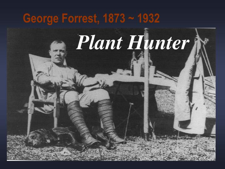 George Forrest, 1873 ~ 1932